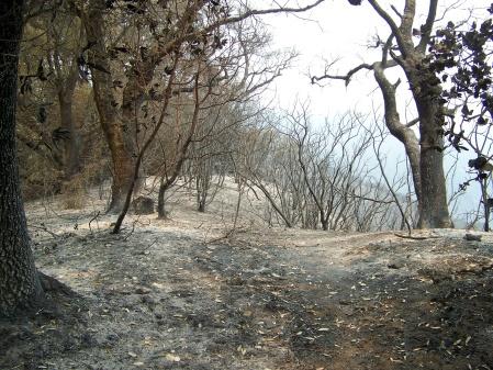 ridge-trail1