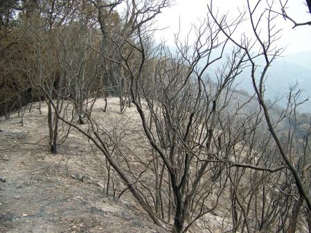 ridge-trail2