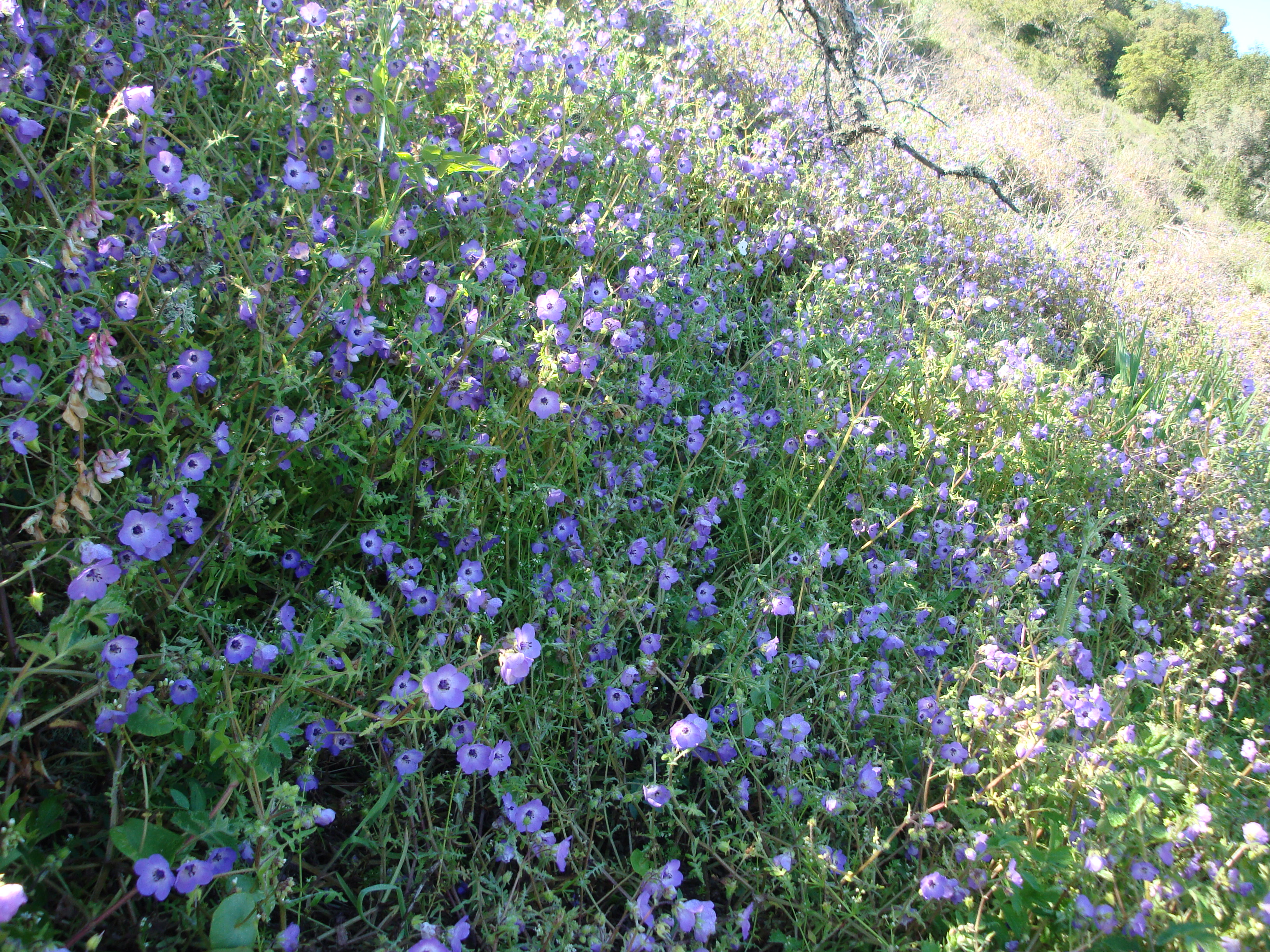 Top blue flowers bush yg78 roccommunity excellent garland park wildflowers xasuan today ca87 izmirmasajfo