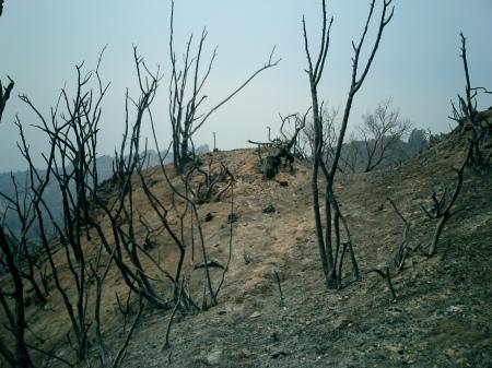 Burned Trail
