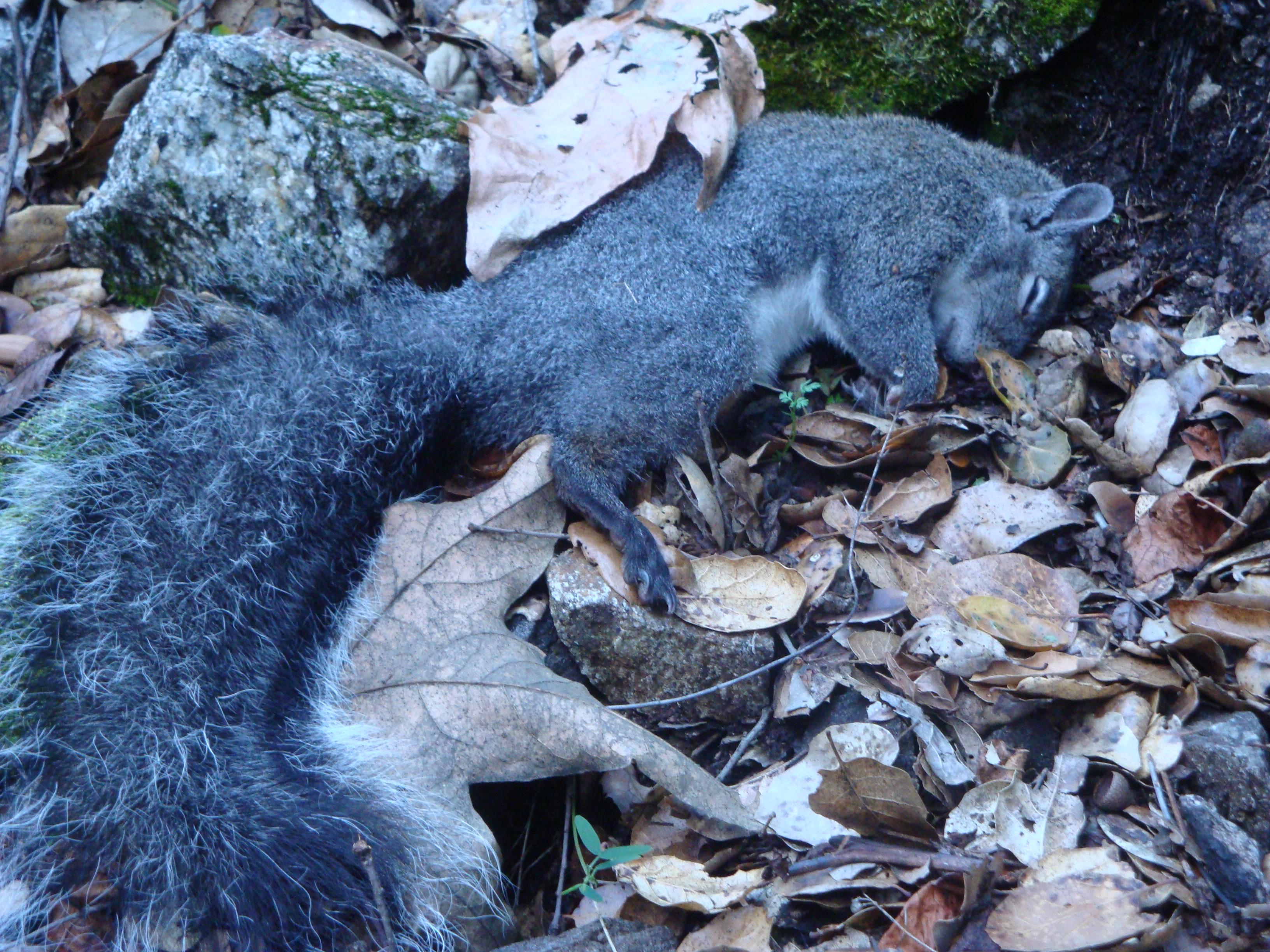 Blue Squirrel A saturday on rattlesnake creek xasáuan today