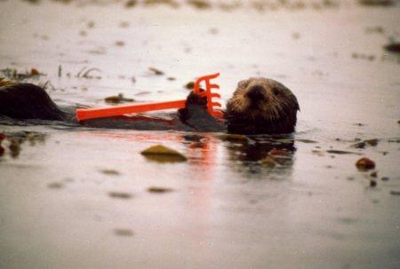 Otterrake